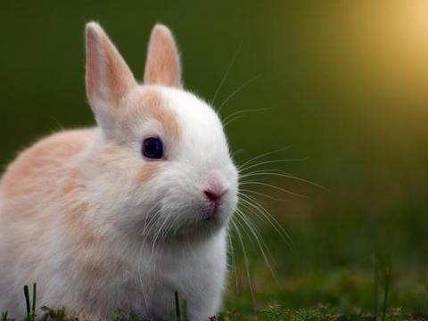 """谁人不爱子孙贤:兔兔人""""阳木生发""""之力相助,未来生活美了"""