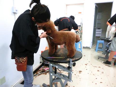 宠物美容师培训学校哪一家比较好