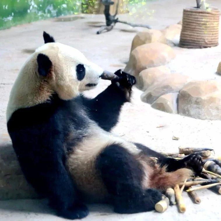 """这个野生动物园成了长三角新网红,2万只萌物等你来""""撩""""!!"""