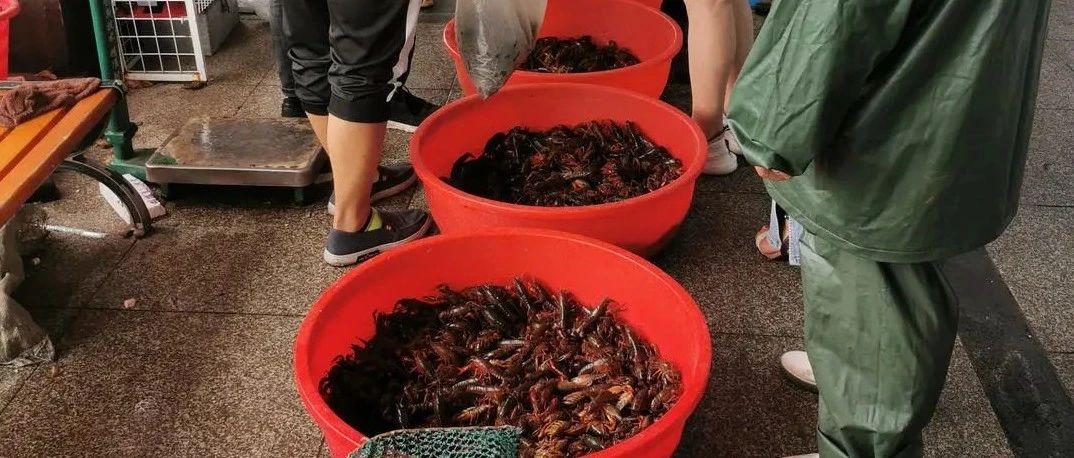 """成都小龙虾低至6元一斤!网友:实现""""小龙虾自由""""的机会来了"""