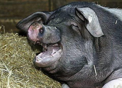今日生猪价格查询-2020年5月25日全国各省份猪价是多少?