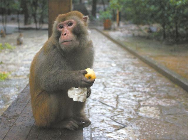 动物园出现怪猴,游客投食后被跟随,还被偷走了价值3万的包