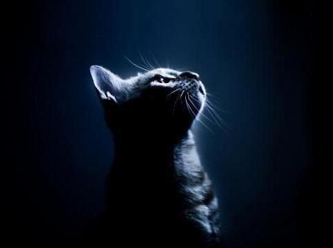 """盘点那些""""孤独终老""""的动物,有一种孤独叫被迫孤独"""