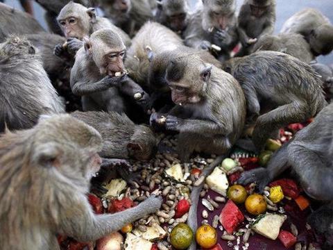 游客稀少,猴群无人投喂,还为抢香蕉打起了群架