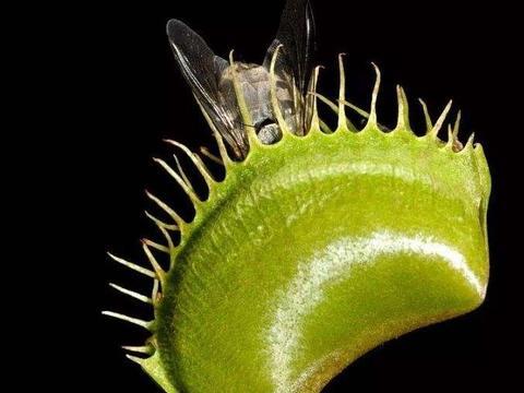 这6种花草,蚊虫非常不喜欢,家里养上1盆,蚊虫见了绕道走!