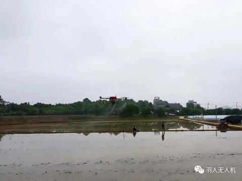 """珠海羽人无人机飞进韩国农田,为水稻生产插上""""科技之翼"""""""