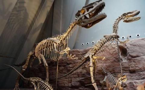 重庆最大自然博物馆,藏有一亿年前的恐龙骨架