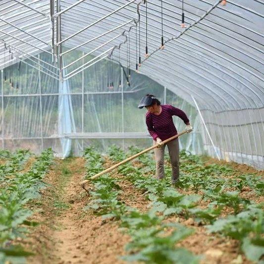 农业农村部:确保农业农村发展好势头不逆转