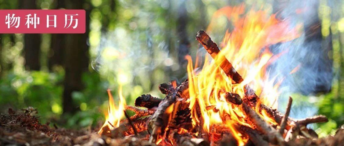 肺结核:祖宗一把火,后人咳吐血