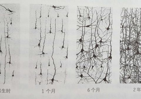 """0-3岁是脑神经细胞增多时期,家长做好这3点,宝宝长出""""聪明脑"""""""
