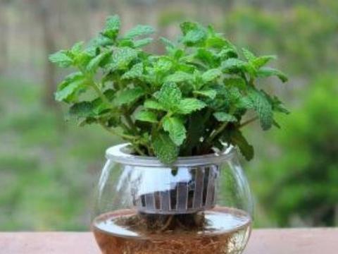 卧室里放4种植物,净化空气驱蚊虫,尤其第二种,老人小孩都健康