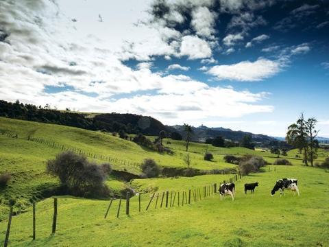 雅士利菁珀:优质奶源是品质的根本