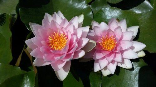 预计一个月内,桃花非常多,享受爱情幸福生活的4大生肖