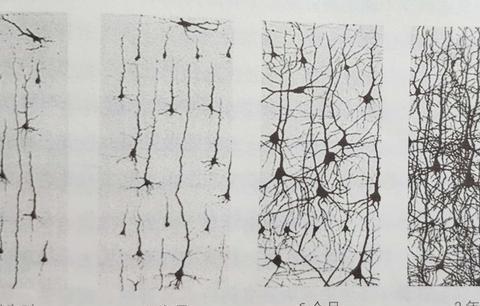 0-3岁是脑神经细胞增多时期,家长做好这3点