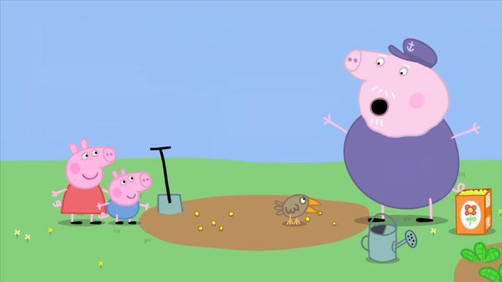 小猪佩奇:猪爷爷在种花呢,可是种到一半,花籽都被小鸟吃了