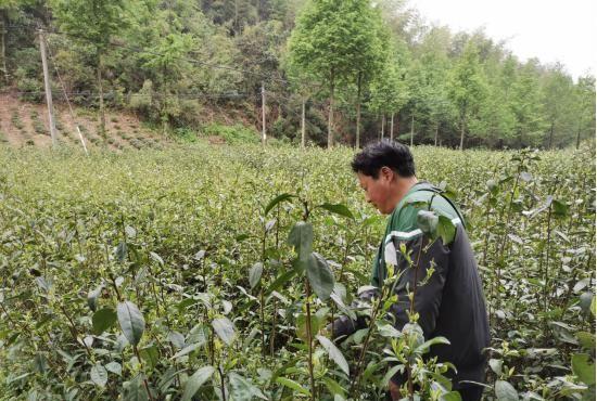 池州市青阳县朱备镇:贫困户中的文艺人