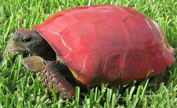 """男子野外发现一只""""红壳乌龟"""", 走近细看, 愤怒不已"""