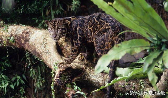 """最能熬夜的猫科动物:它用整晚通宵来捍卫""""夜猫子""""的荣誉"""