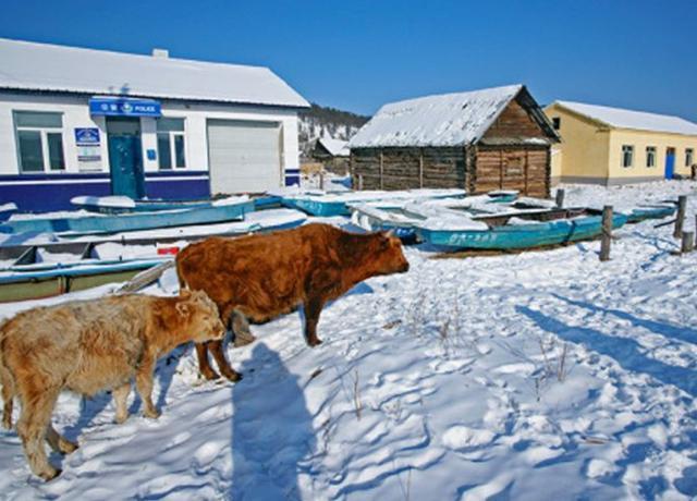 中国最北的村庄,冬季雪景似冰雪世界,原生态环境令人超向往!