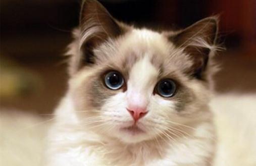 猫咪长的有多好看?颜值这么高,快来吸猫吧