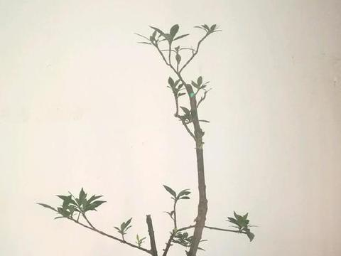 夏天盆栽植物秘籍:高温天谨慎4方面,花草枝叶翠绿又稠密