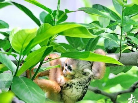 """萌宝出动!这个""""六一""""来广州动物园看动物宝宝"""