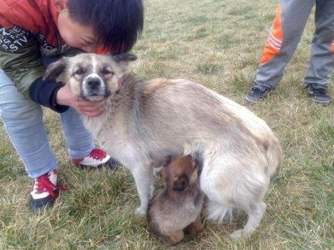 小孩照顾流浪小狗,我问能不能送我一只?而他回绝的理由让我语塞