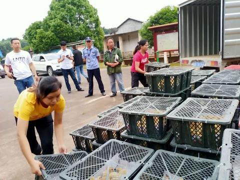 """湖南衡南:邦农合作社真""""帮农"""",6300只鸡苗免费送给贫困户"""