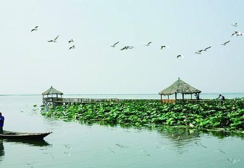 阳澄湖金秋季节,大闸蟹个头大分量足还肥美,吃货们不可错过