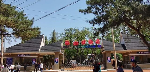 来看大熊猫吧!30日10:30动物园开始售票