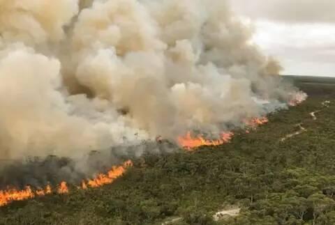 澳大利亚发现3种会使用火的鸟类,澳洲4个月来的山火或是它们放的