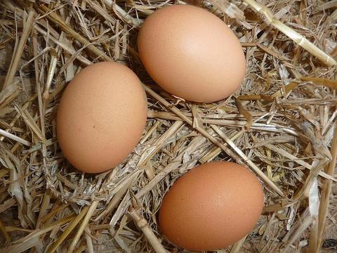 """专家说:""""轻症患者的食谱中有每天吃3~4个鸡蛋。"""""""