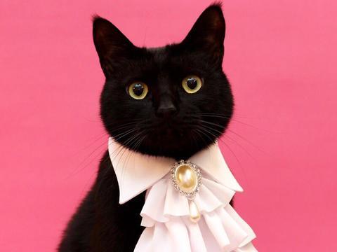 化身猫界贵族!主人为爱猫手作「质感颈圈」 黑猫秒变时尚小王子