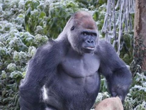 远处看见一个奇怪大猩猩,结果走进看到它手里拿的东西后赶紧报警
