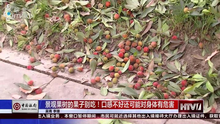 景观果树的果子能吃吗?工作人员揭秘,家里有的赶紧扔了吧!