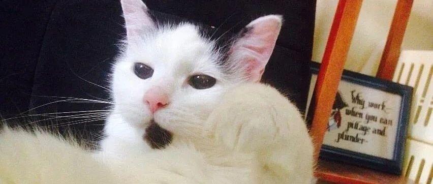 9岁猫咪与12岁的女孩相遇,然后又相互陪伴了彼此20年,简直不敢相信!网友:奇迹!!