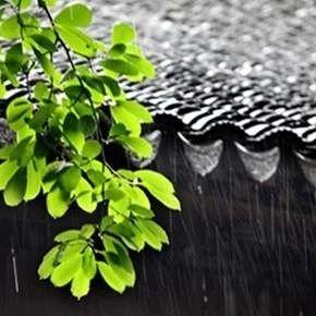 杭州今日入梅,梅雨季节居家除霉妙招请收好