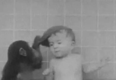 猩猩从小在人类圈子里长大,认定自己就是正常的人类,现状如何