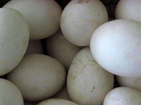 孕妇吃1000个鹅蛋去胎毒!胎毒真的存在还是玄学?真相令人意外