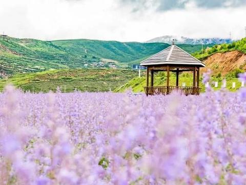 四川高原上的薰衣草地,景色媲美普罗旺斯,却无人问津