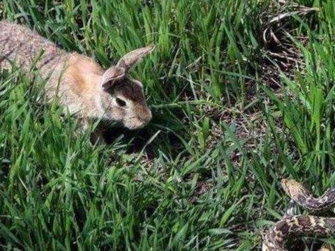 """兔子飞天打老鹰的脸,直接吓懵了在场所有人,这是""""兔子精""""吧"""