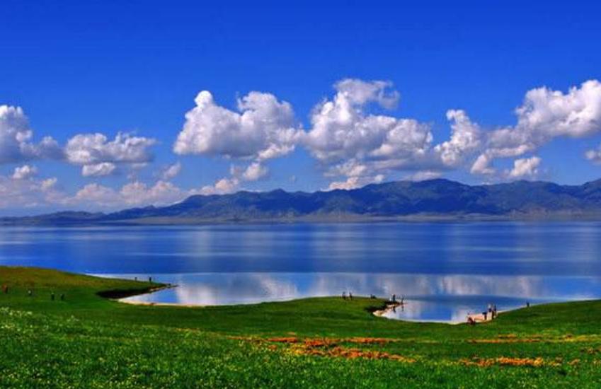 花的海洋,蓝色的世界,新疆赛里木湖太美了