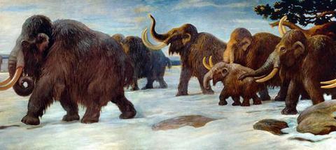 14头猛犸象被赶入陷阱,24斤重舌头和内脏成史前人类美味