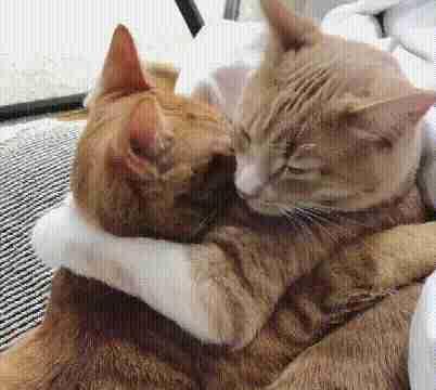 两只橘猫相伴流浪,大橘落入陷阱,小橘守在笼外,谁都不肯独自走
