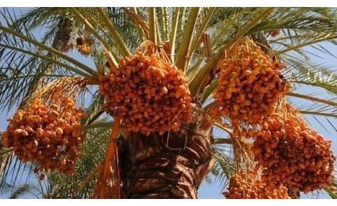 """迪拜这个水果,好吃有营养,有钱人""""抢着买""""穷人还""""看不上"""""""