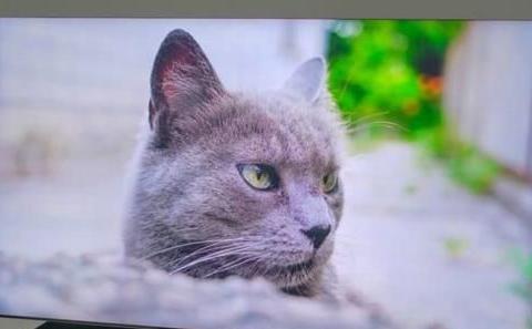 真8K影像+AI 影像升频技术,三星最新 QLED 8K电视,是真牛