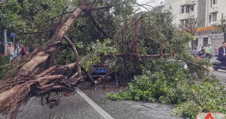 突发!柳石路大树轰然倒下,两辆小车刚好经过,被砸中