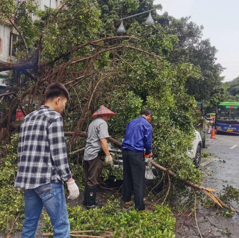 突发!柳石路大树轰然倒下,两辆小车刚好经过,被砸中!