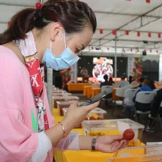 """集齐""""龙珠"""",召唤好吃的番茄!来看市民为浦东番茄直播""""带盐""""→"""