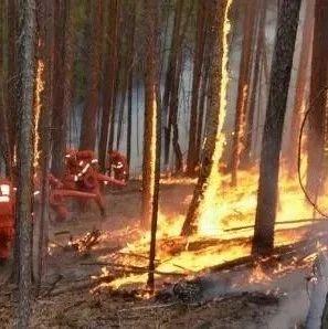 内蒙古大兴安岭毕力格林场突发森林火灾!目前明火已全部扑灭